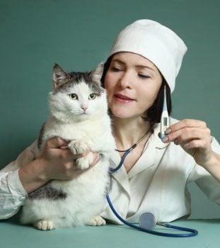 Veterinary Office Software 4